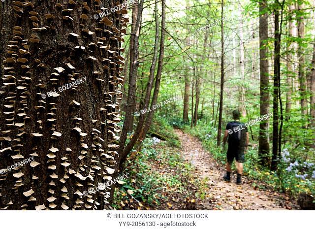 Shelf Fungi on Coontree Trail - Pisgah National Forest near Brevard, North Carolina USA