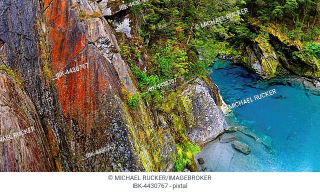 Blue Pools, rock pools filled from Makarora River, turquoise crystal clear water, Wanaka, Otago Region, South Island, New Zealand