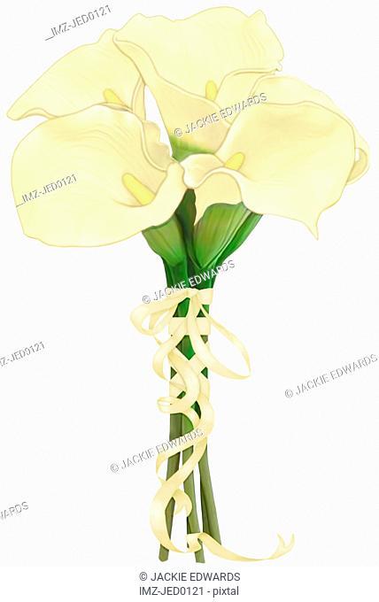 A bouquet of cream calla lilies