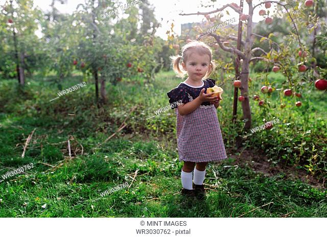 Young girl wearing dress standing in an orchard, holding apple, looking at camera