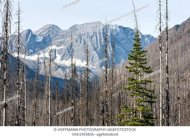 Verendrye Burn in the Kootenay National Park, British Columbia, Canada