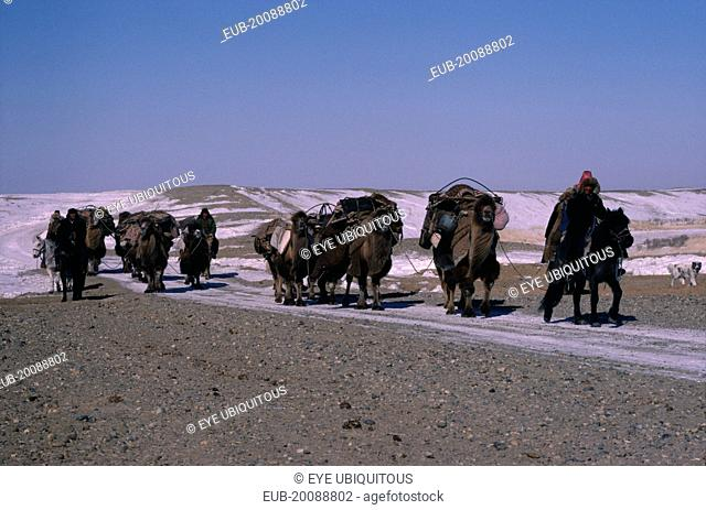 Kazakh minority people moving camp riding horses and leading pack camels