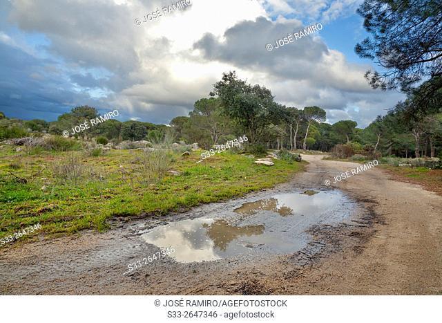 Road in The Piquillo. Cadalso de los Vidrios. Madrid. Spain. Europe