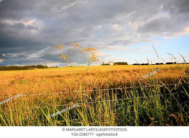 Beautiful summer fields in golden sunlight in Scotland