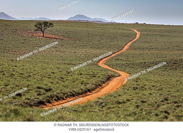 Road and Acacia tree, Okonjima, Namibia, Africa