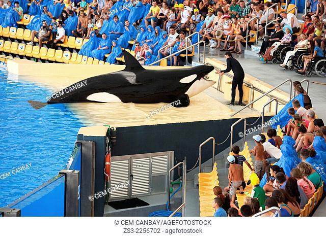 Orca show, Loro Parque, Puerto de la Cruz, Tenerife, Canary Islands, Spain, Europe