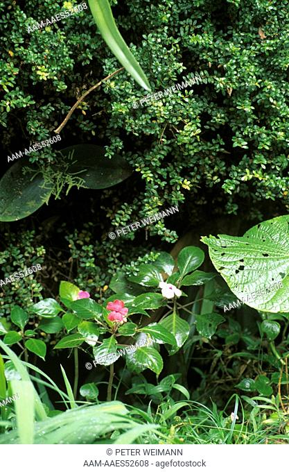 Cloud Forest Monteverde Cloud Forest Reserve/Costa Rica/CA