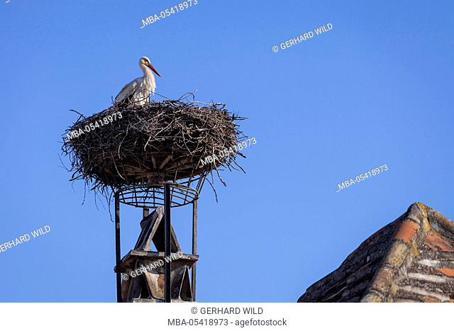 Stork in the nest, Purbach at Lake Neusiedl, Burgenland, Austria