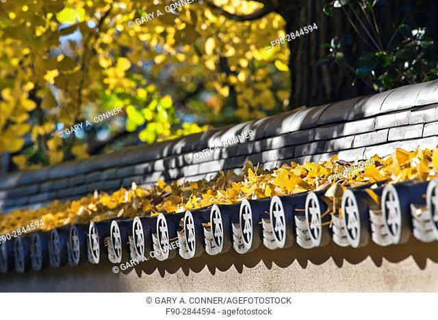 Autumn ginkgo leaves and ceramic roof tiles of Honmonji Temple in Ikegami, Tokyo, Japan