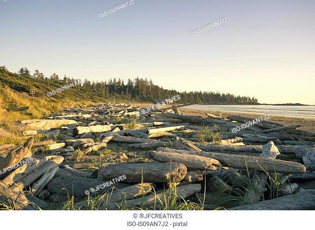 Piles of logs, Tofino, British Columbia, Canada