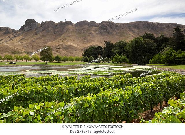 New Zealand, North Island, Hawkes Bay, Havelock North, Te Mata Peak, view from vineyards
