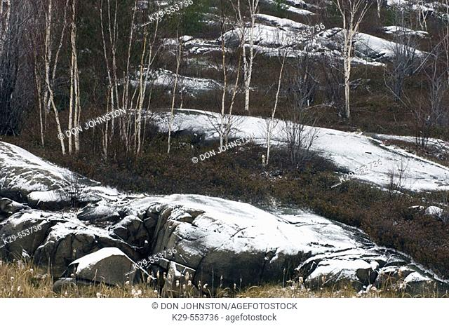 Early winter snow on rock outcrops in birch woodland. Ontario, Canada