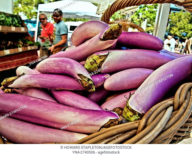 Eggplant (Solanum melongena) or aubergine is a species of nightshade. Shown here for sale at the Boston Farmer's Market at Copley Square