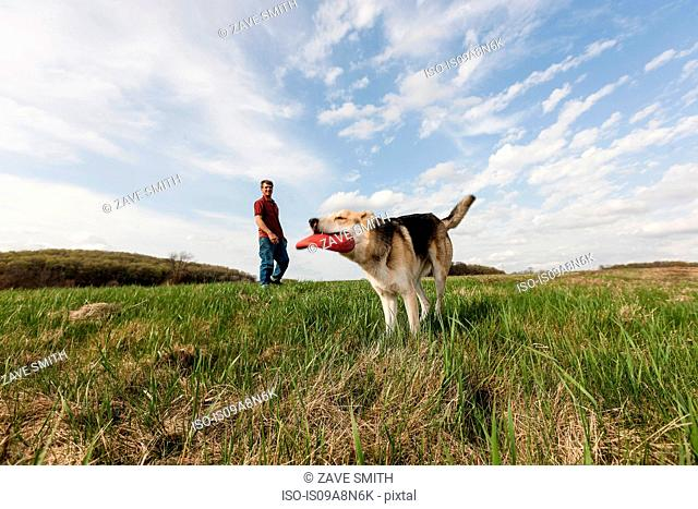Alsatian dog with red frisbee