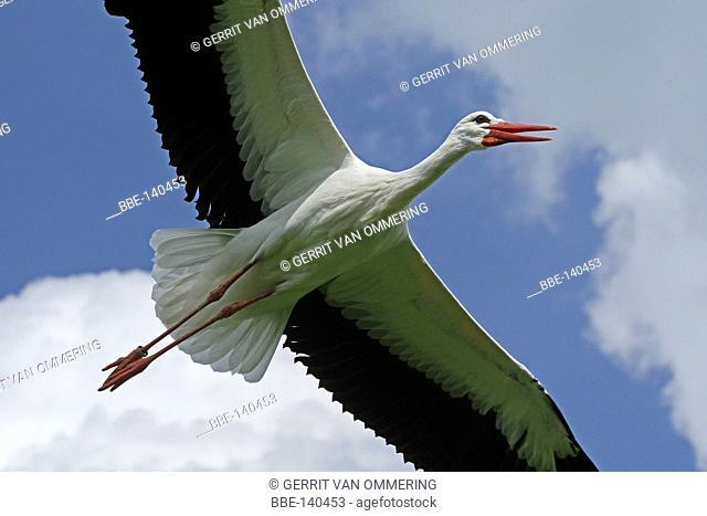 flying stork against sky
