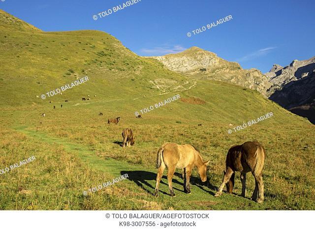 caballos pastando, Linza, Parque natural de los Valles Occidentales, Huesca, cordillera de los pirineos, Spain, Europe