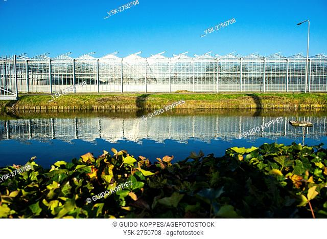 Delftland, Netherlands. External view on a Dutch, agri-industrial greenhouse for growing crops and vegetables