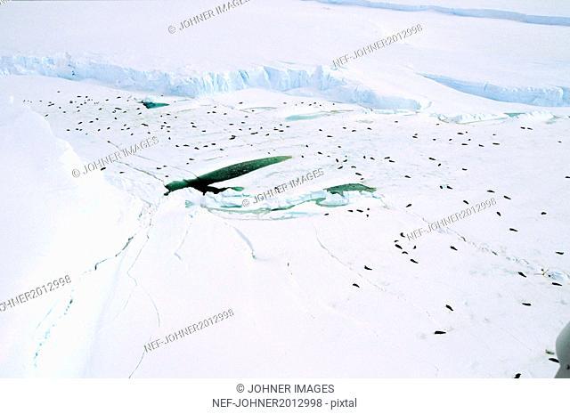 Seals in snowy landscape