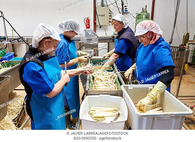 Peeling asparagus, Canned vegetables, Canning Industry, Agri-food, Los Arcos, Navarre, Spain