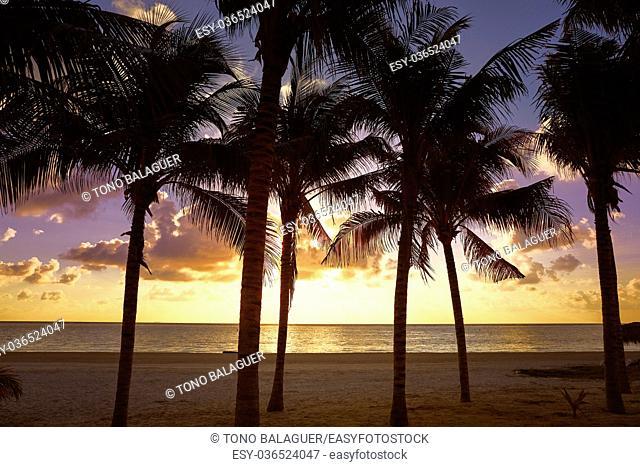Riviera Maya sunrise beach palm trees at Mayan Mexico