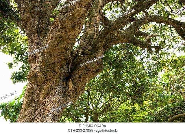 Tree, Lamma Island, Hong Kong