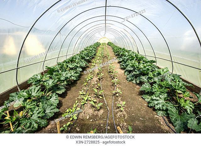 Plants inside a greenhouse on a farm