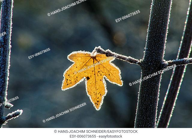 leaf with ice crystals