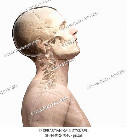 Human neck bending, Illustration
