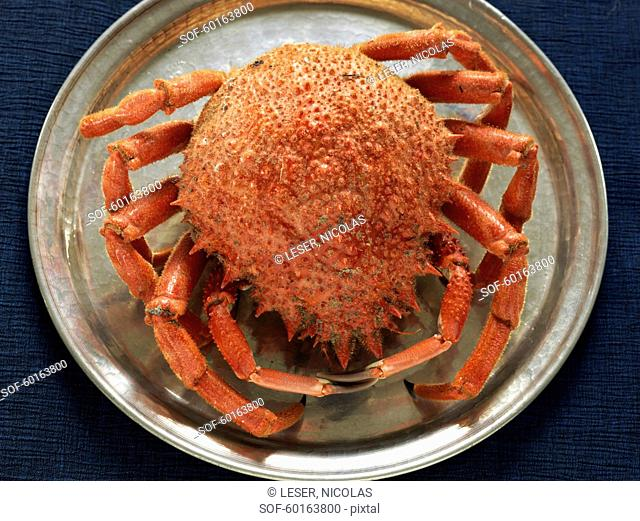 Cooked sea spider