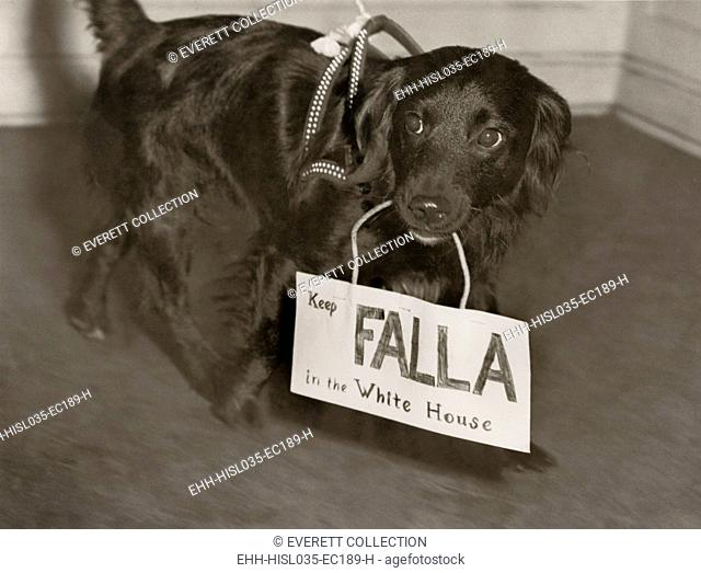 Franklin Roosevelt's 1944 campaign enlisted dogs to do their part. A canine supporter carries a sign, 'Keep Falla in the White House
