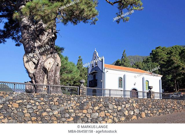 Chapel Ermita Virgen del Pino, Canaries pine, near El Paso, La Palma, Canary islands, Spain