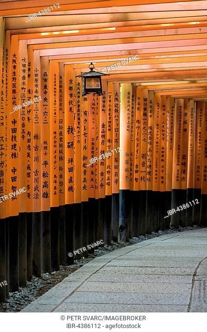 Lantern in arcade lined with torii gates, Fushimi Inari-taisha Shrine, Kyoto, Japan