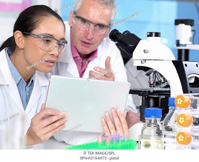 MODEL RELEASED. Scientist viewing results on a digital tablet in a laboratory
