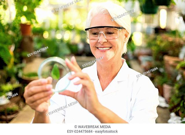 Female scientist smiling while examining leaf on petri dish