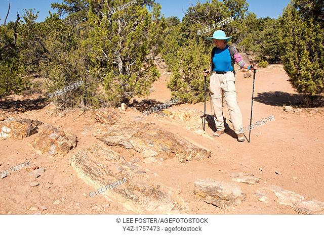 USA, Utah, woman hiking at Escalante at Escalante Petrified Forest State Park to enjoy the petrified wood, views of the Grand Staircase and Colorado Plateau