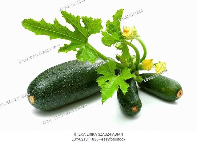 Zucchini bunch
