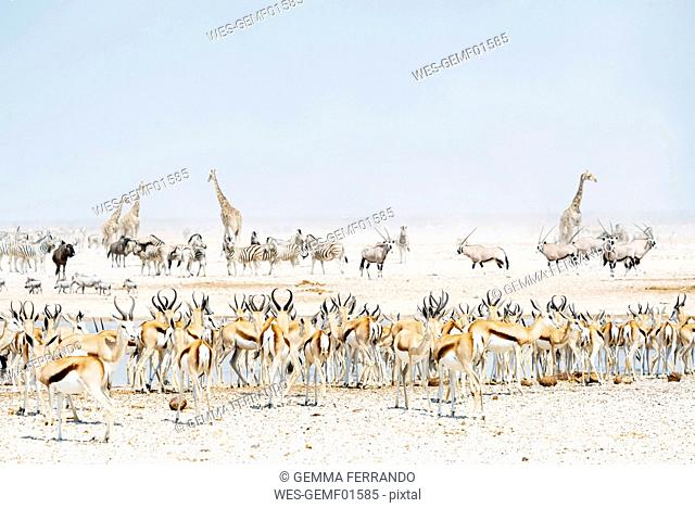 Namibia, Etosha National Park, wild animals near a waterhole