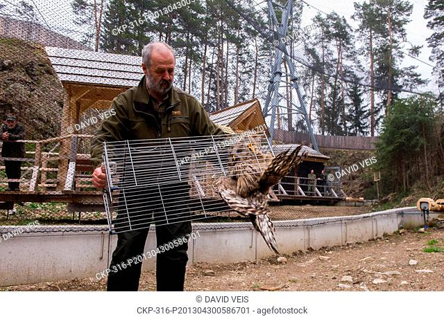 Petr Juha lets out an Ural Owl (Strix uralensis) into an owl aviary in a small quarry in Borova Lada, Czech Republic, April 30, 2013