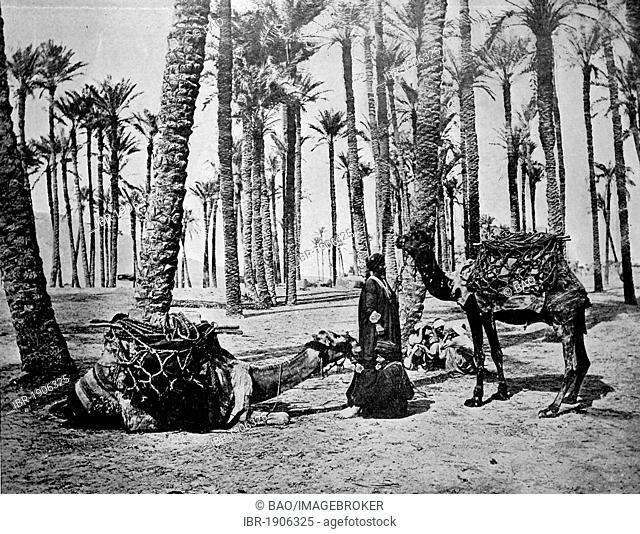 One of the first autotype photographs of the Oasis de Touggourt, Algeria, circa 1880