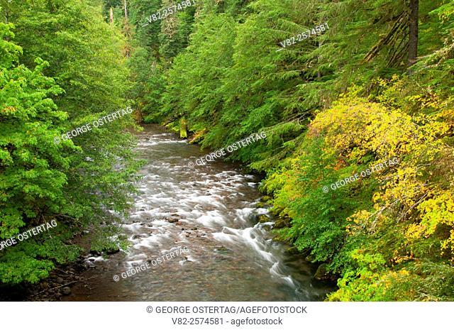 Breitenbush River, West Cascades Scenic Byway, Willamette National Forest, Oregon