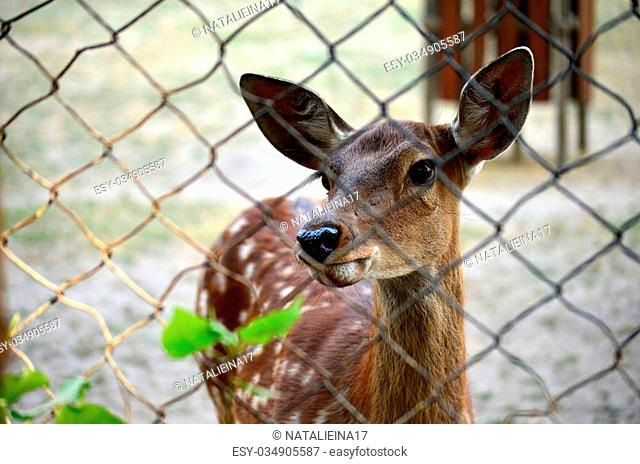 Deer in the zoo. Selective focus. Photo through the bars. Walk on the weekends. The protection of these animals