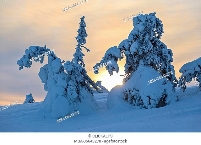 Sun and clouds frame the the snowy woods in the cold arctic winter Ruka Kuusamo Ostrobothnia region Lapland Finland Europe