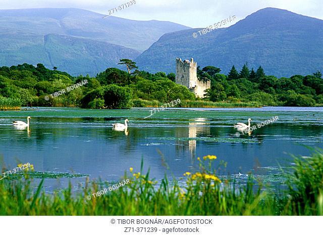 Swans. Ross Castle. Lower Lake. Killarney NP. Ireland