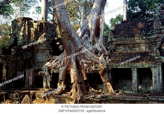 Cambodia: Tree roots envelop Preah Khan, Angkor