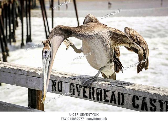 Pelican Pier Pismo Beach, USA