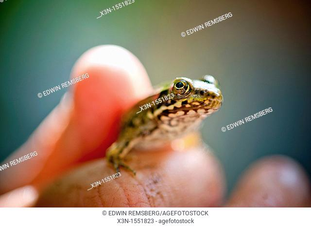 Hand holding a frog