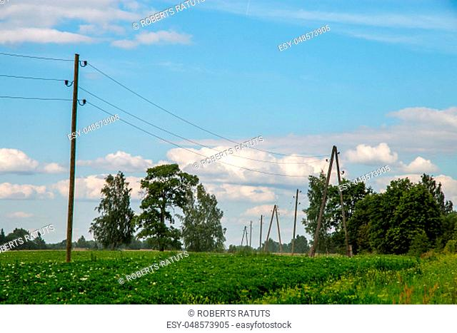 Potatoes plants with white flowers growing on farmers field. Landscape with flowering potatoes. Summer landscape with green field, trees and blue sky