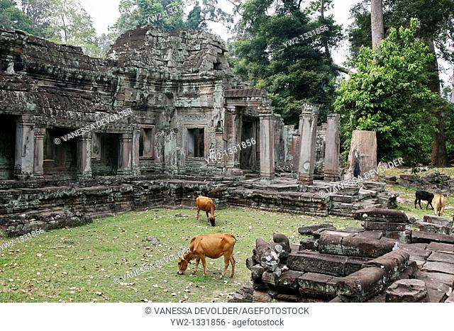 Preah khan at Angkor in Cambodia. November 2010.  V10CAM0128RM