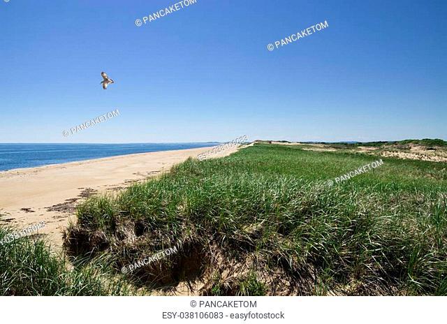 dunes and beach on Plum Island in Massachusetts