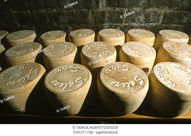 Salers cheese production. Cantal. France